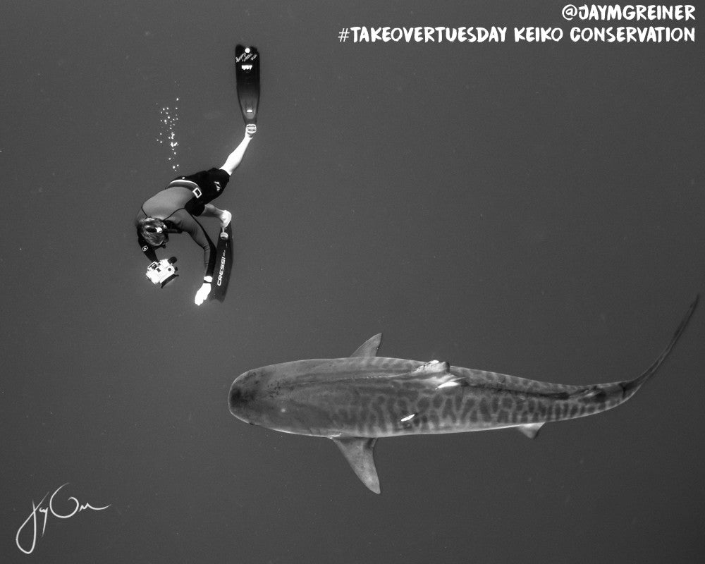 jason jay greiner juansharks one ocean diving keiko conservation takeover tuesday