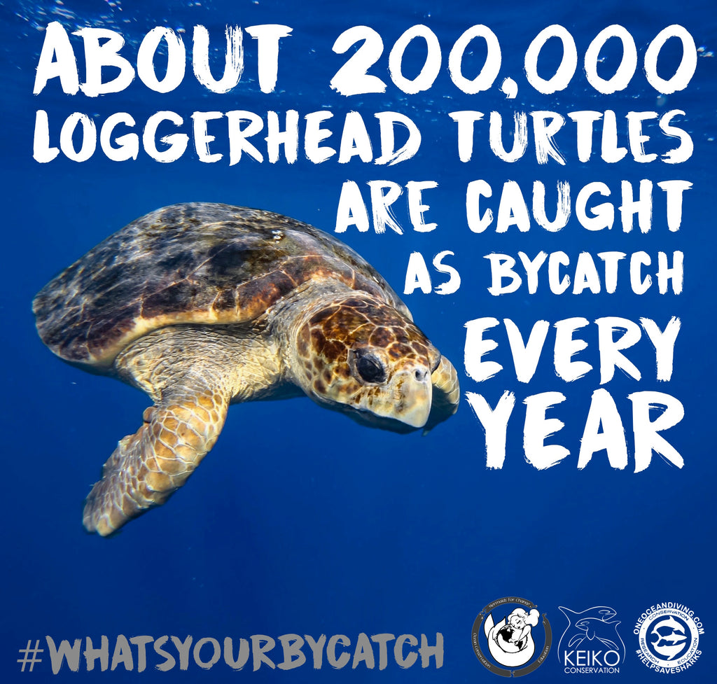 bycatch loggerhead turtle whats your bycatch marina
