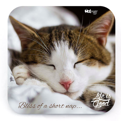 Cats - Bliss of a Nap - Coaster (Single)