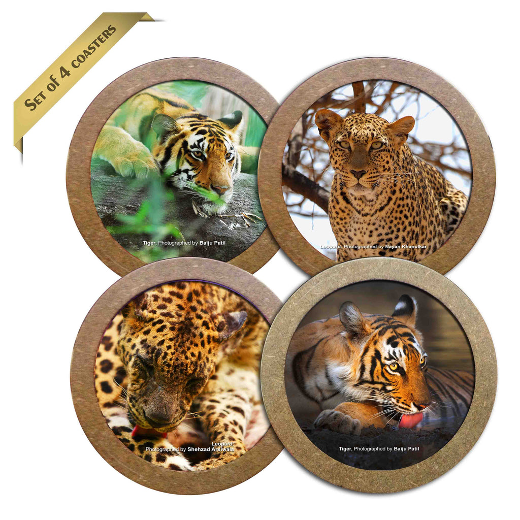 Wild Focus Coasters - Wild Cats - Hot Muggs