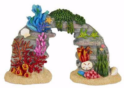 Mini Coral Reef with Sea Life