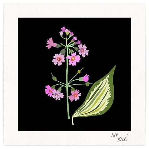 Hosta Plant Square Art Print - Pink Flowers on Black Background