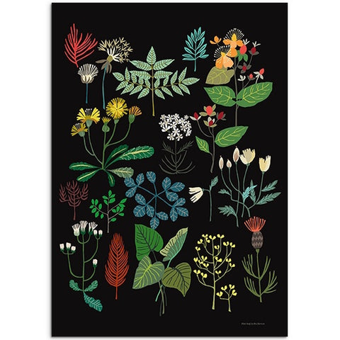 Plant Study Art Print - Various Plants And Flowers on a Black Background