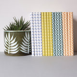 Collection of Ola Layflat Notebooks lined up next to a succulent plant.