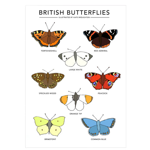 British Butterflies Original illustrated print A3