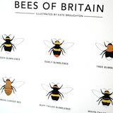 A4 Bees of Britain Print
