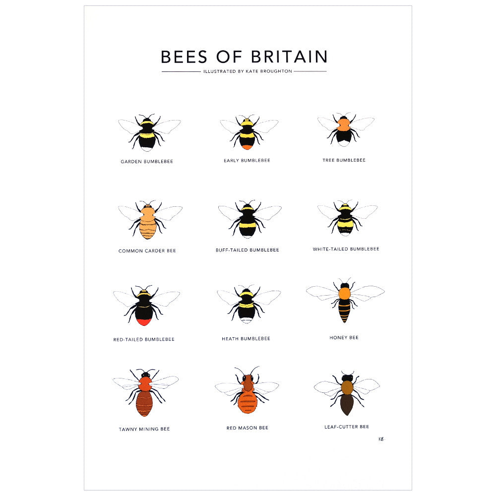 printed illustration of various bees