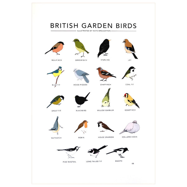Printed Illustration of various British garden birds