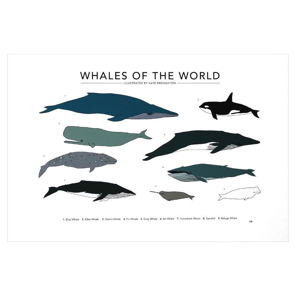 Printed Illustration of various whales
