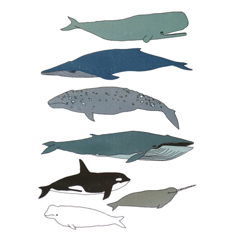 Whales of the World Temporary Tattoo Set