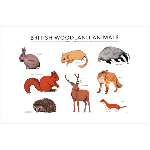 Illustrated print of various woodland animals