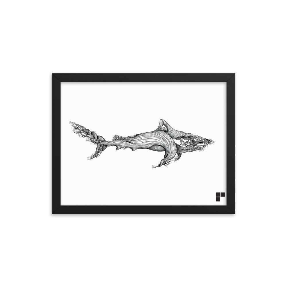 Framed Shark