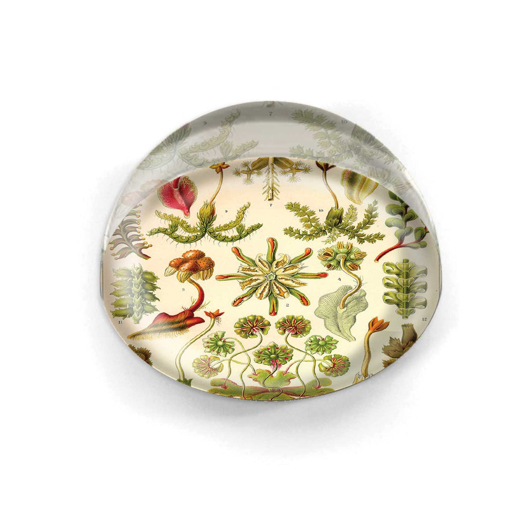 Paperweight - 4239S