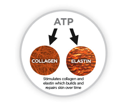 Image shows how microcurrent therapy works by increasing ATP production which stimulates collagen and elastin which builds and repairs skin over time.
