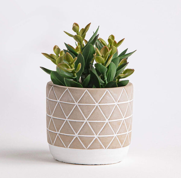 Succulent and Planter