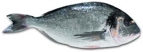 Royal Sea Bream - 10 Kgs