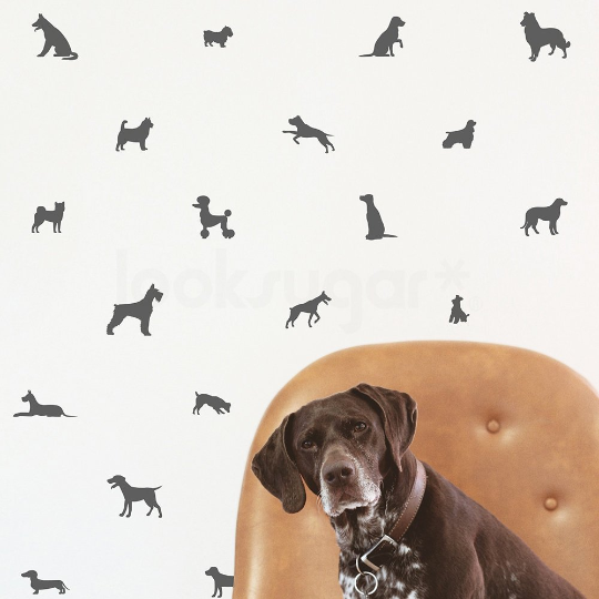 PUPPY DOG PATTERN DECALS