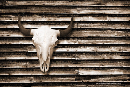Buffalo Skull on Barn Wall Postcard