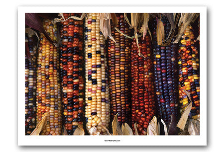 Indian Corn Art Print