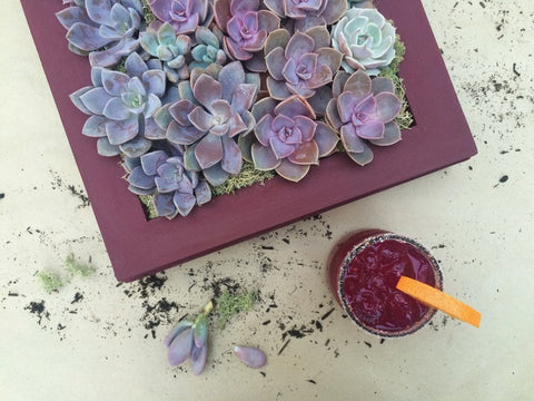 Succulent Wall Garden Workshop with Valerie Jurado!