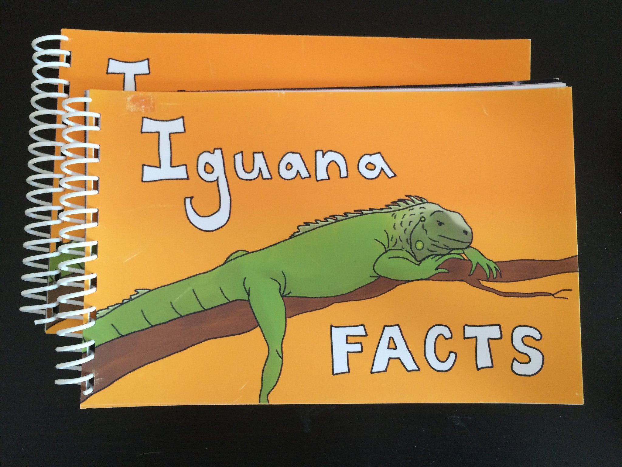 MORGAN KESSLER // IGUANA FACTS