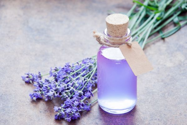 Lavender Essential Oil | ISA Professional