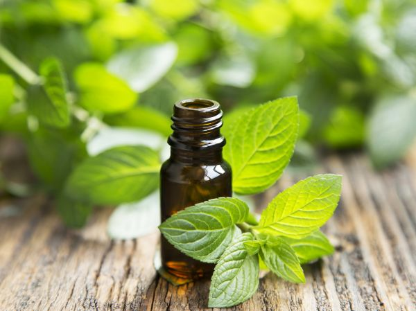 Peppermint Oil For Aromatherapy | ISA Professional