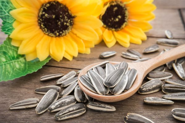 Sunflower Seeds For Hair Health | ISA Professional