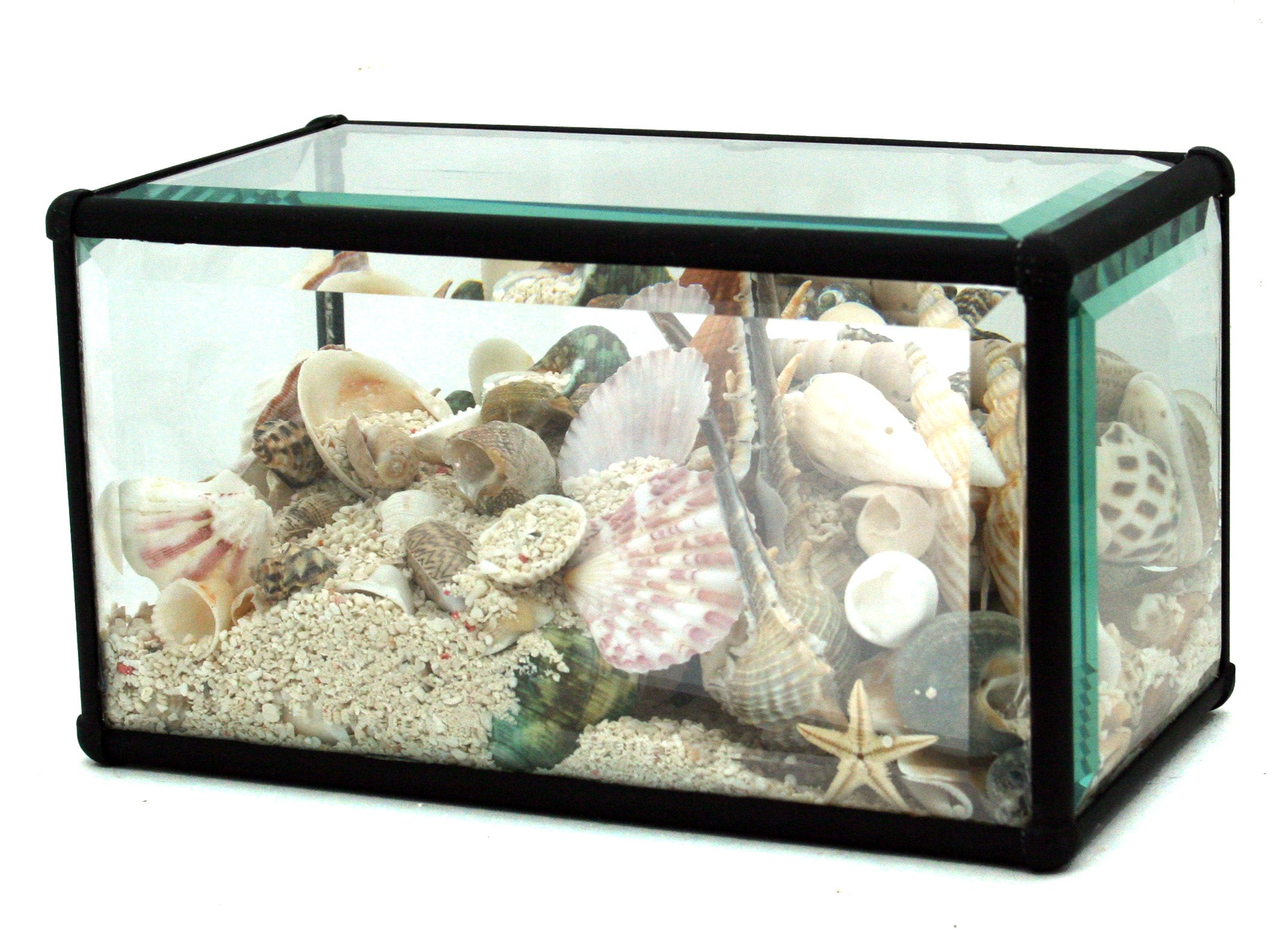 Medium Shell Terrarium - Wanderlustre