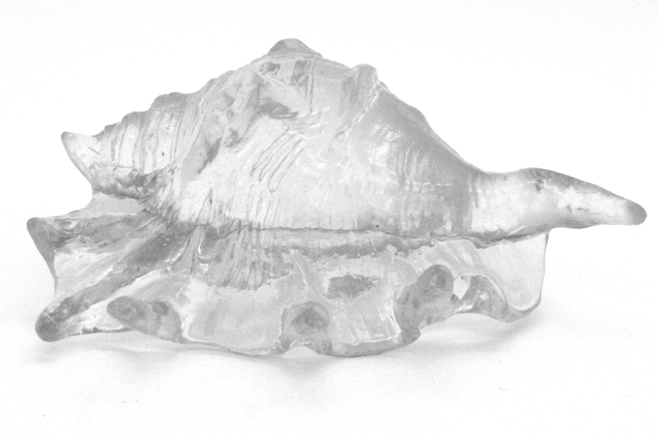 Clear Lambis Shell Sculpture - Wanderlustre