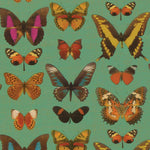 Load image into Gallery viewer, Deyrolle Butterflies Gift Wrapping Paper in Turquoise