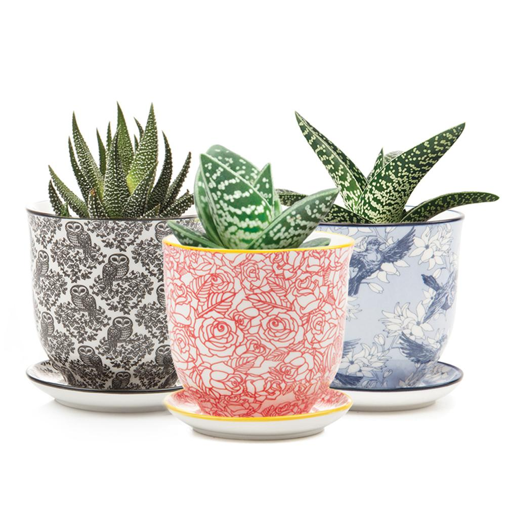 Liberte Pot and Saucer - Wanderlustre