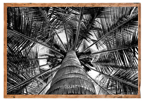 Palm Canvas by David Ballam