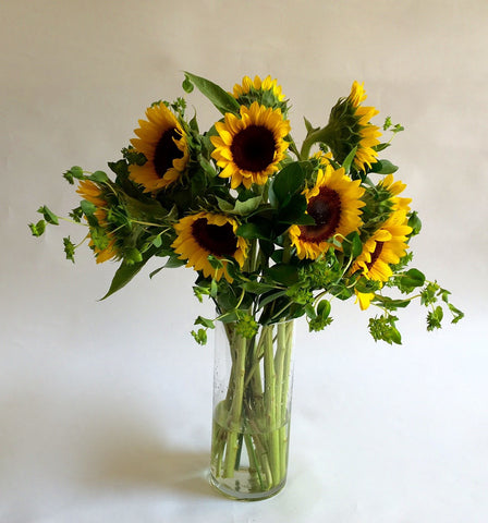 Beautiful Sunny Sunflowers