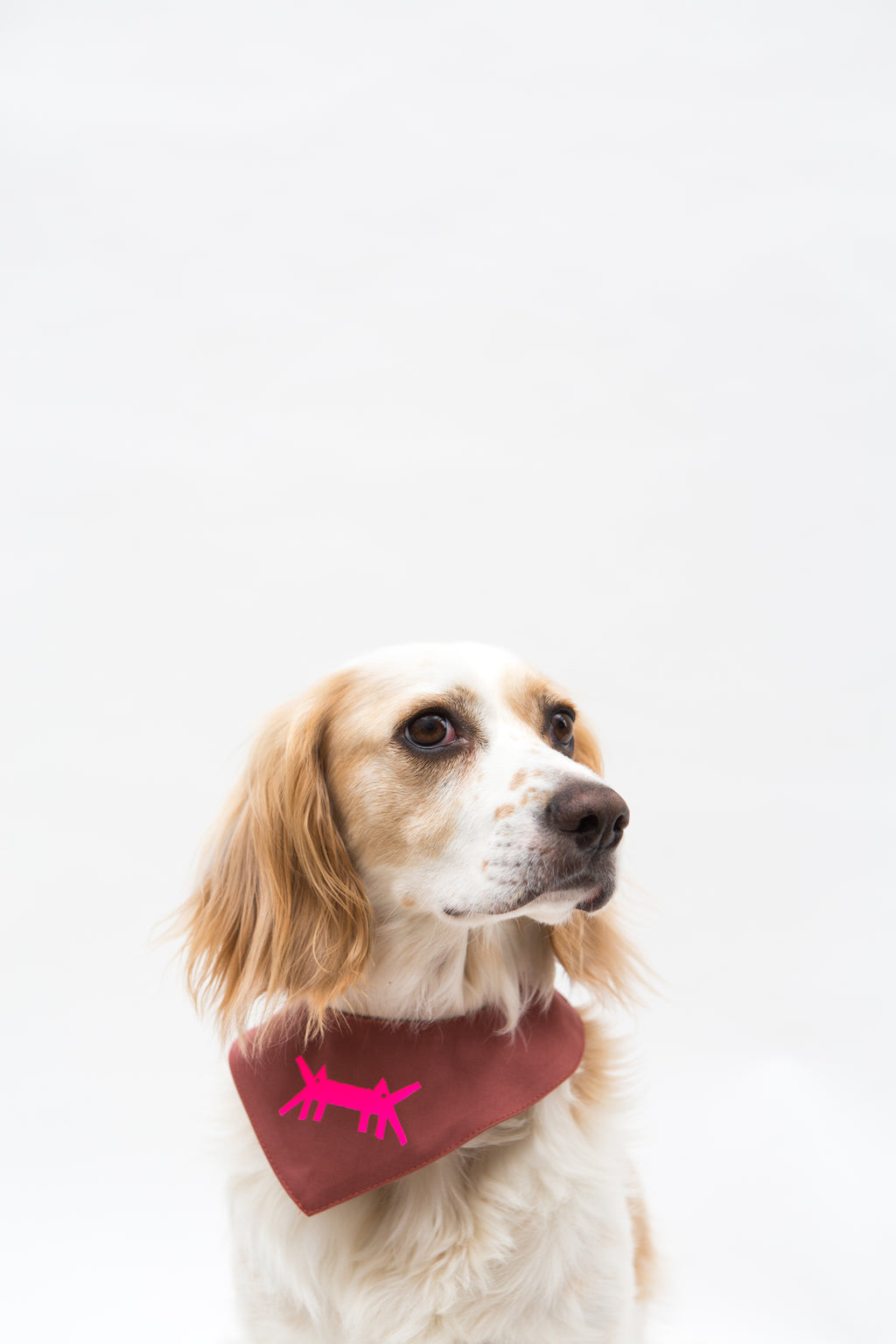 Doggy Scarf in Dark Pink