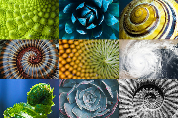 The Golden Spiral: Design found in art and nature