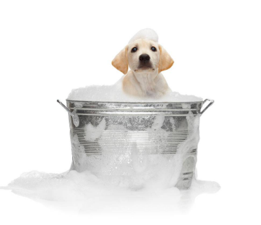 puppy getting bath in metal tub with bubbles