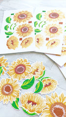 Grouped Fresh Sunflowers