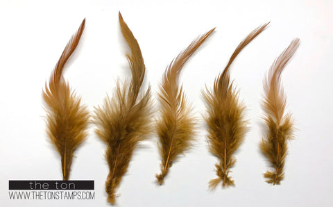 Feathers - Tawny Simple