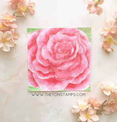 Rose Close Up Cling Background