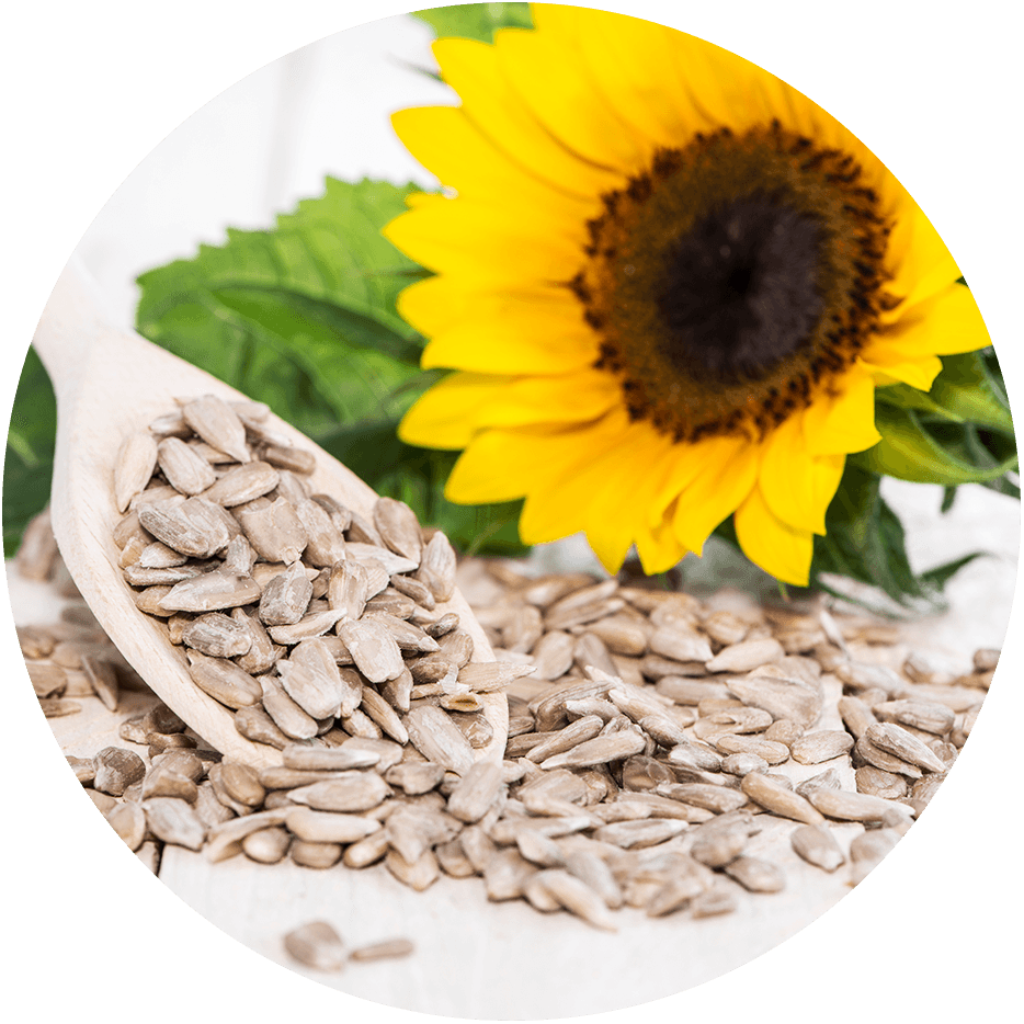Lecithin gained from sunflowers.
