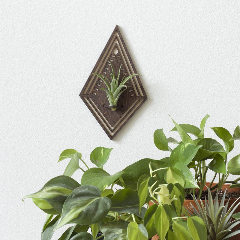Diamond | Walnut Air Plant Wall Hanger