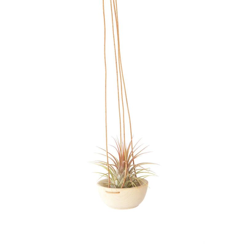 Mini | Wood and Leather Air Plant Hanger