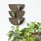 Trio Sunrise | Walnut Air Plant Wall Hanger