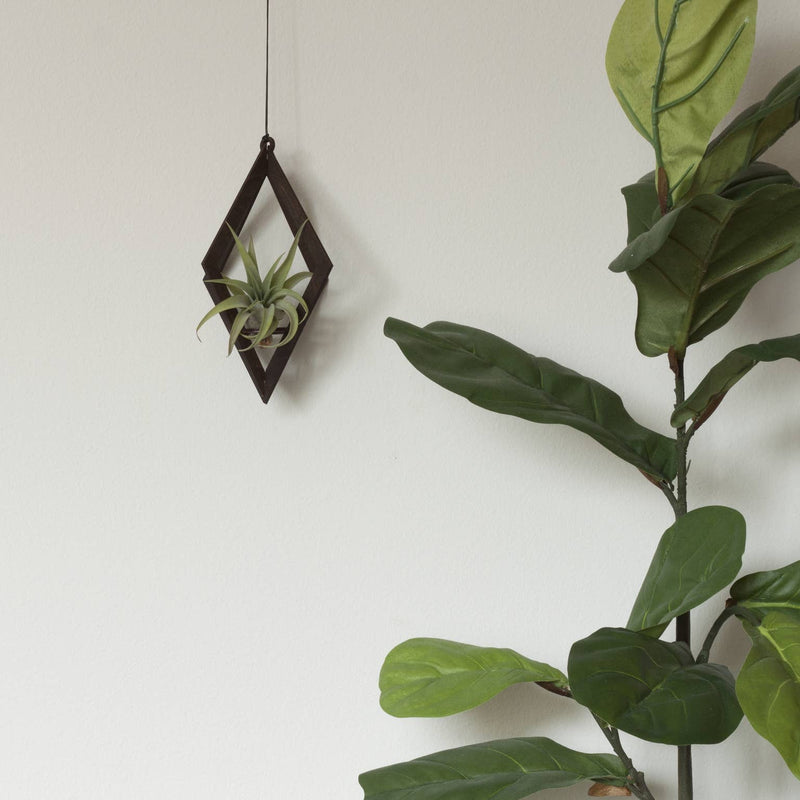 Uno | Walnut Air Plant Hanger