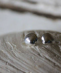 Day bay stud shell earrings