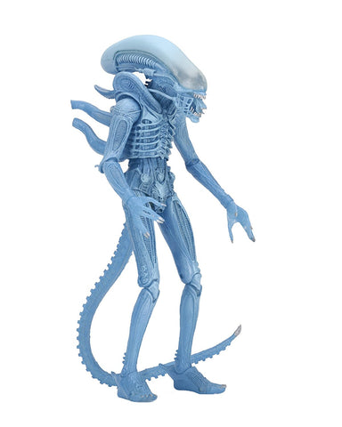"NECA Aliens 7"" Scale Series 11 Blue Warrior Action Figure - Collectors Row Inc."