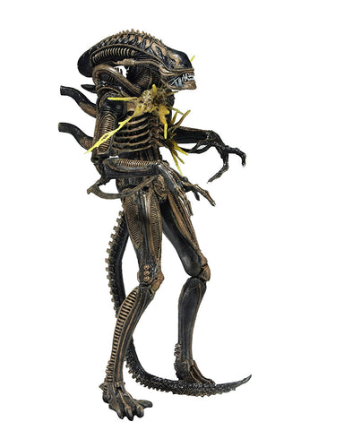 "NECA - Aliens 7"" scale action figure - Series 12 Xenomorph Warrior Brown (Battle Damaged) - Collectors Row Inc."