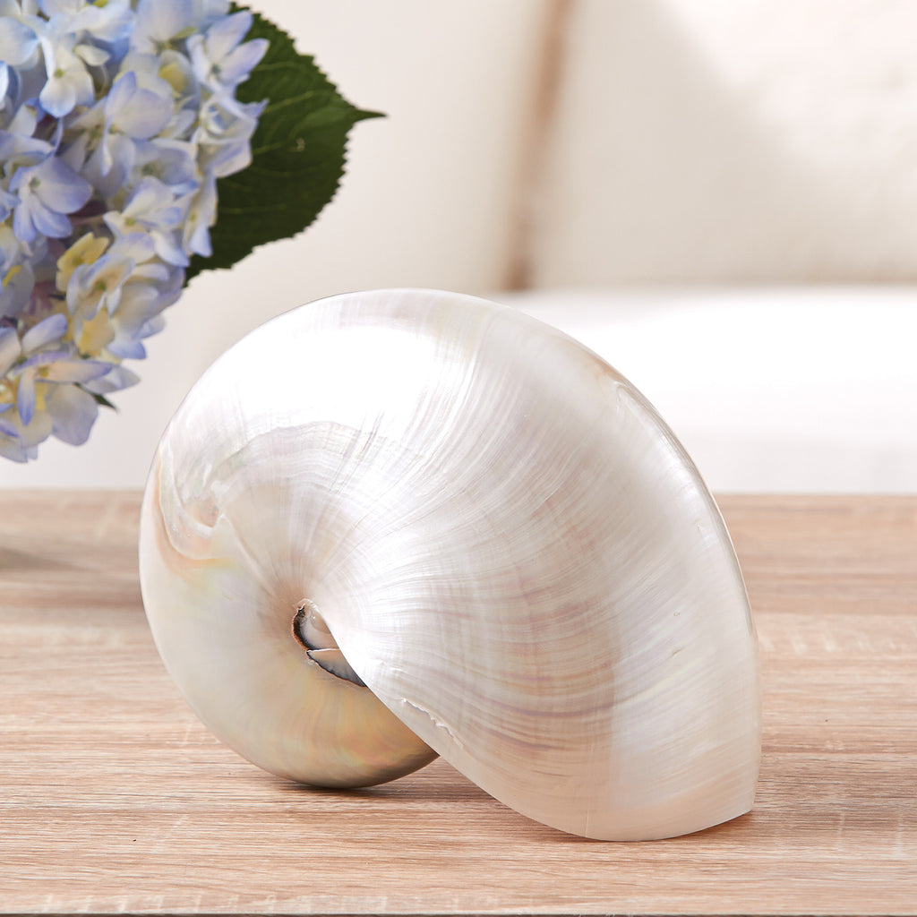Polished Chamber Nautilus Shell