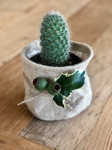 Cactus in hessian pouch